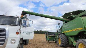 Alexandria family raises organic grain in Westmoreland