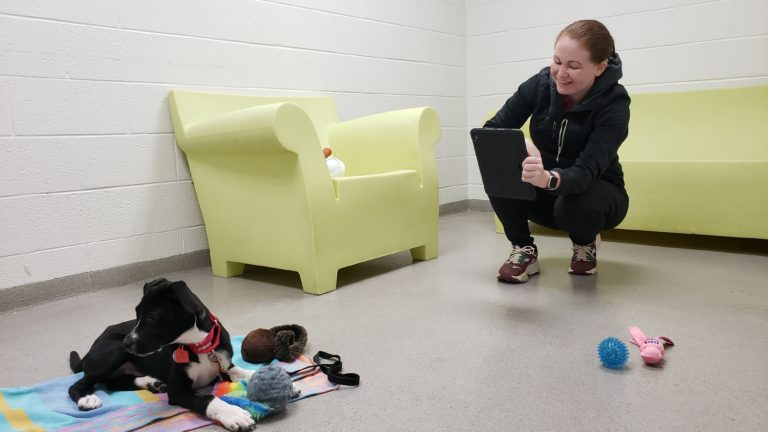 Animal fostering increases during pandemic