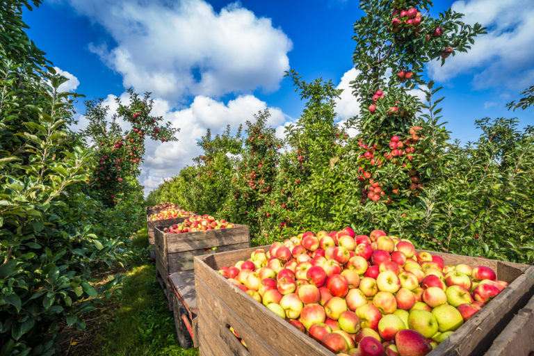 A brief history lesson on the art of hard cider